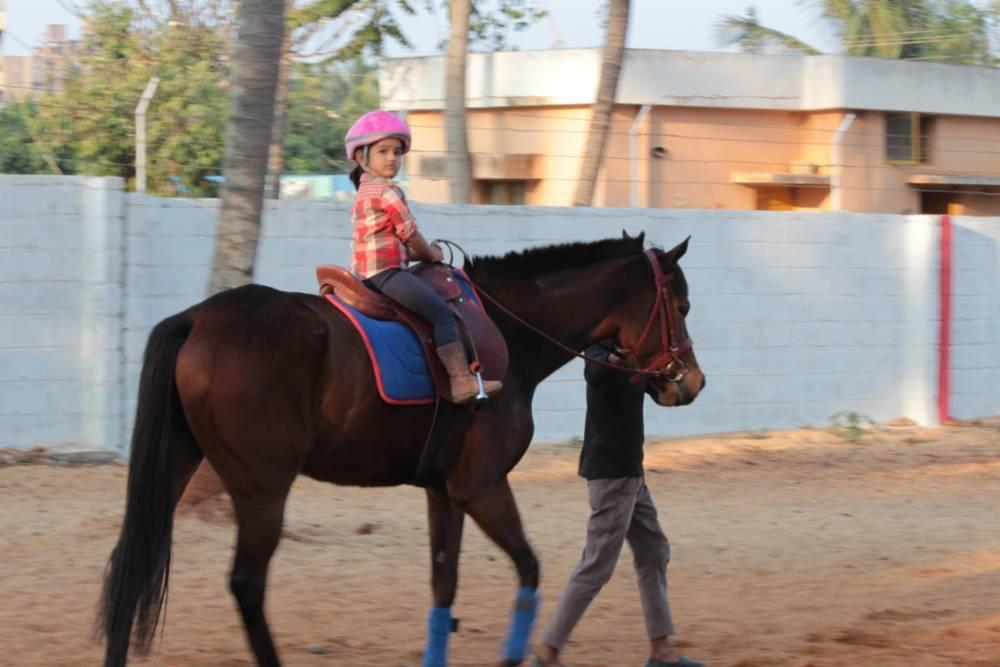 Equestrian services from a professional team