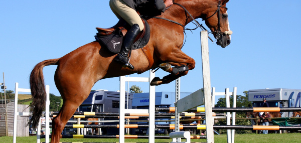 Common Things Equestrian Should Know Besides Riding