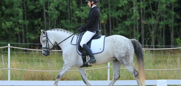 How to Select the Most Appropriate Horse for Your Riding Style